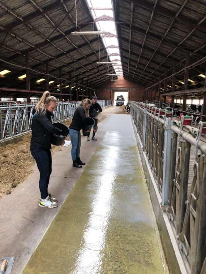 Is een coatingvloer de beste oplossing in een veehouderij?